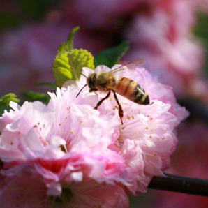 bee-blossums